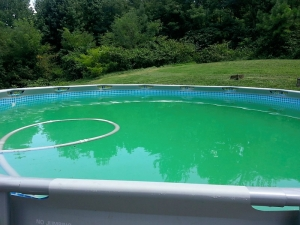 Agua de Piscina con presencia de algas